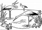 Pond Coloring Pages Frogs Storks Printable Adults Print Friends sketch template