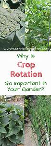 The Importance Of Crop Rotation In The Home Garden