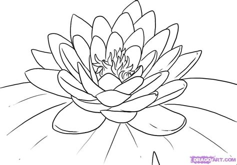 outline pictures of flowers for colouring flower outline az coloring pages