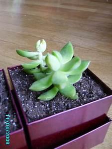 Cactus Sans Epine : cactus sans noms ~ Melissatoandfro.com Idées de Décoration