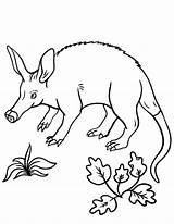 Coloring Aardvark Pages Coloringcafe Printable Pdf Colouring Sheet Nature Designlooter Printing Stamp Birds Animals sketch template