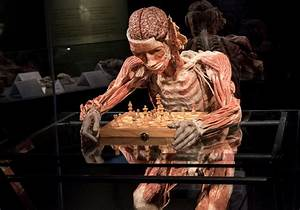 Body Worlds Vital is heading to Cape Town - Pretty Please ...