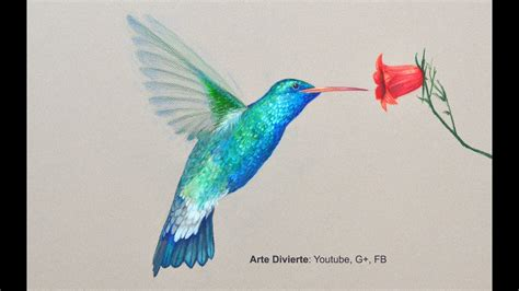 como dibujar  colibri  lapices de colores arte divierte youtube