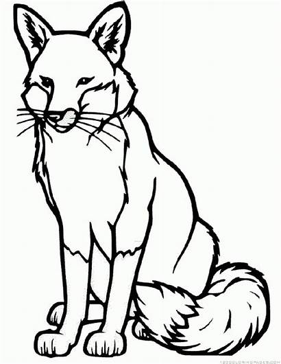 Fox Coloring Pages Kit Drawing Colouring Sheets