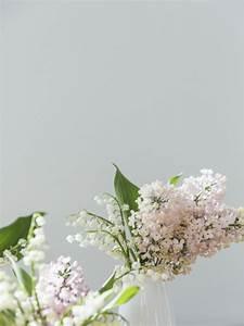 Van Der Maiglöckchen : maigl ckchen pflanzenfreude ~ Lizthompson.info Haus und Dekorationen
