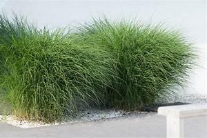 Balkon Sichtschutz Gras : ziergras auf dem balkon so gedeiht es bestens ~ Michelbontemps.com Haus und Dekorationen