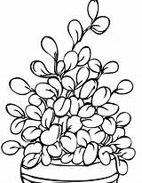 Coloring Plant Plants Herbs Printable Potted Handipoints Drawing Flowers Tomato Cell Trees Clipart Sheets Pots Primarygames Jade Getdrawings Clipartmag Cat sketch template