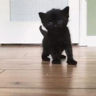 black kitten funny cat gifs    gif