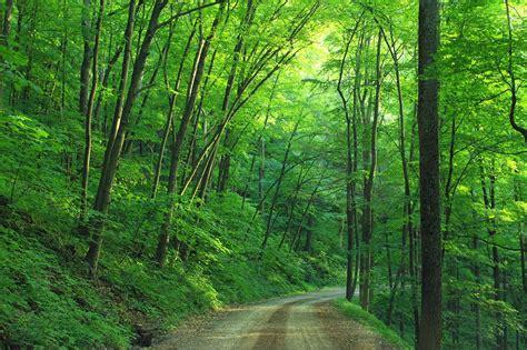 dirt road forest landscape leaves path pathway quiet