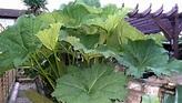 Bog Plants - plants - bog plants - Pond Life