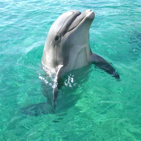 characteristics bottlenose dolphins