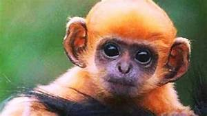 10 Interesting Monkey Facts My Interesting Facts