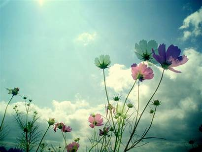 Flowers Background Wallpapers Sky Pretty Flower Floral
