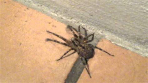 ragno in casa ragno in casa