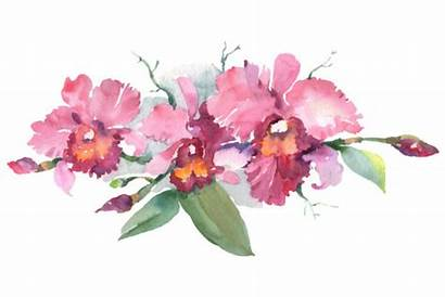 Orchid Watercolor Orchids Clipart Pink Branch Graphic