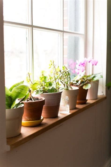 Best Windowsill Plants by Happier Houseplants How To Keep Indoor Plants Healthy