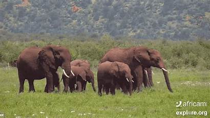 Explore 14th Elephant Herd February Week Africa