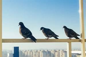 Tauben auf dem balkon so vertreiben sie sie dauerhaft for Garten planen mit was hilft gegen tauben auf dem balkon