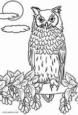 Coloring Owl Owls Printable Colored Cool2bkids Already Template sketch template