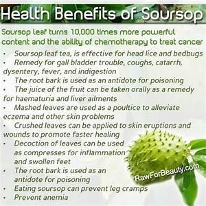 benefits of guyabano leaves and fruits