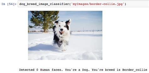 github ltfschoendog project term  project  dog breed