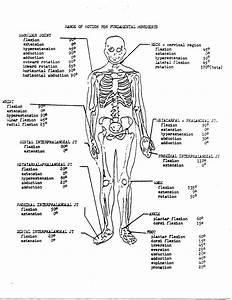 Best 52  Physiology Wallpaper On Hipwallpaper