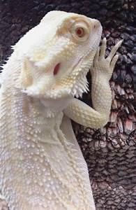 Best 25+ Albino ideas on Pinterest | What is an albino ...
