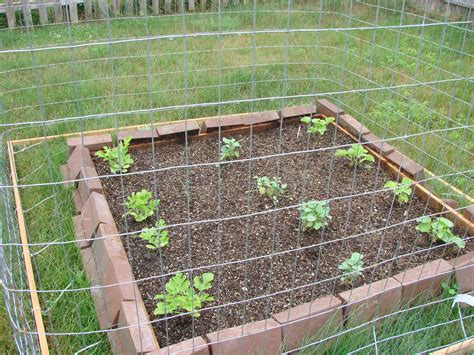 simple small backyard vegetable garden house design with