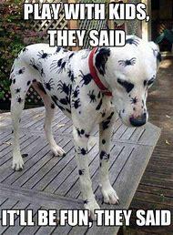 Funny Animal Halloween Memes