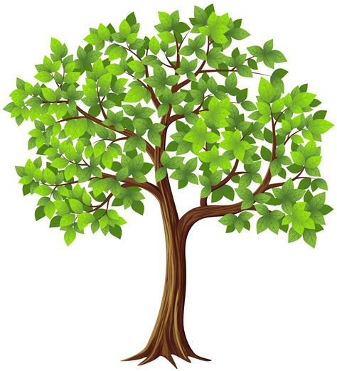 Tree Images No Background by Tree Png Transparent Clip Image Gallery Yopriceville