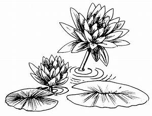 Lily Pad Clip Art - Cliparts.co