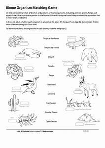 Budget Template Business Biome Organism Matching Game Biology Worksheet Printable