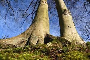 Pflanzen In Der Wohnung : pflanzen die wir in der wohnung haben sollten drachenbaum gesundheit ~ A.2002-acura-tl-radio.info Haus und Dekorationen