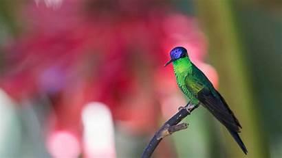 Peapix Hummingbirds