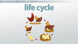 Made By Teachers  Animal Life Cycle Diagrams