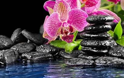 Orchid Desktop Flower Wallpapers Stones Pink Water
