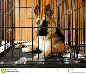 Young german shepherd in crate royalty free stock images for Best dog crates for puppies