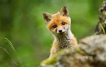 Fox Jessowey Fanpop Friends Under Down