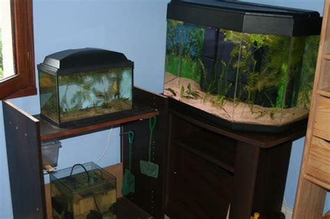 chambre aquarium mes aquariums