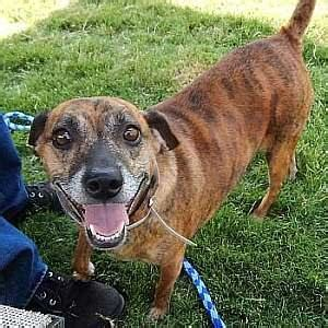 Adoptable Georgia Dogs For August 20, 2015  Georgia. Michigan Chrysler Dealers Free Website Hoster. Quickest Online Degree Programs. Physical Therapy Home Exercise Program. Community Colleges In Orlando Area. Fashion Designing Career Ruud Heating And Air. Motorcycle Insurance In Ontario. Personal Injury Referral Italian For Tourists. Project Management In Construction