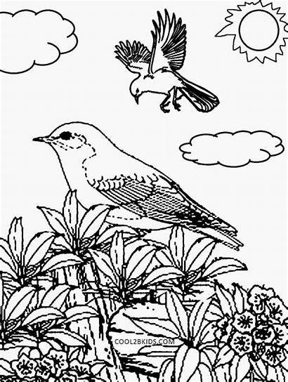 Nature Coloring Pages Printable Adults Children Drawing