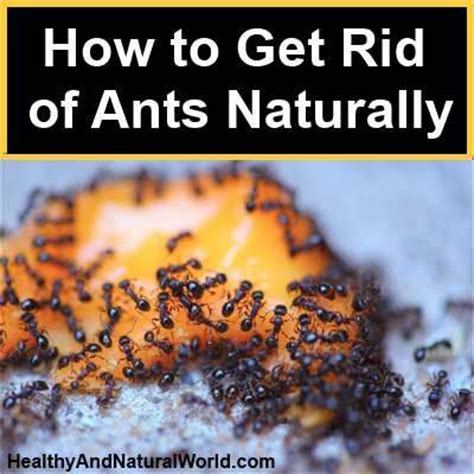 getting rid of ants how to get rid of ants naturally good to know pinterest