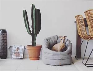 Tipps Bodenbelag Für Büro : 4 tipps f r einen entspannten alltag mit hund im b ro ~ Michelbontemps.com Haus und Dekorationen