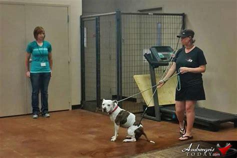 saga board directors train  leading dog experts