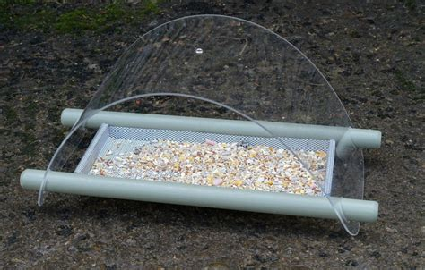 bird ground feeder