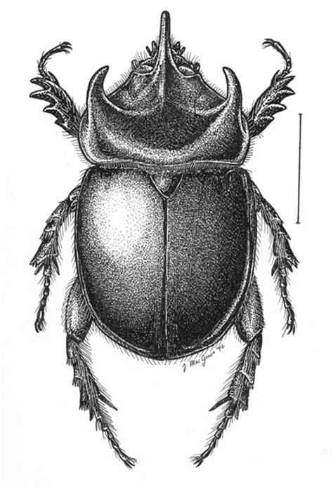 examples  scarab drawings  joe macgown