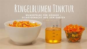 Wände Schalldicht Machen : kr uter als futtererg nzung f r gesunde h hner ~ Michelbontemps.com Haus und Dekorationen