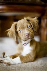 Cute Puppy Dog Eyes