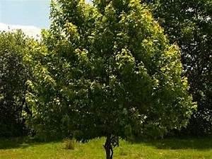 Quel Arbre Planter Près D Une Maison : quel arbre planter dans son jardin ~ Dode.kayakingforconservation.com Idées de Décoration