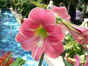 List Of Flower Names A To Z With Pictures. Common And Easy ...